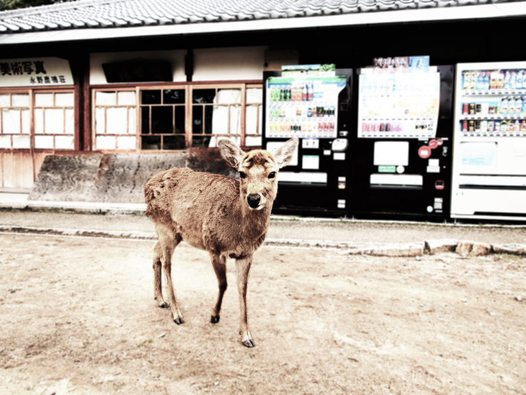 deer-me_1