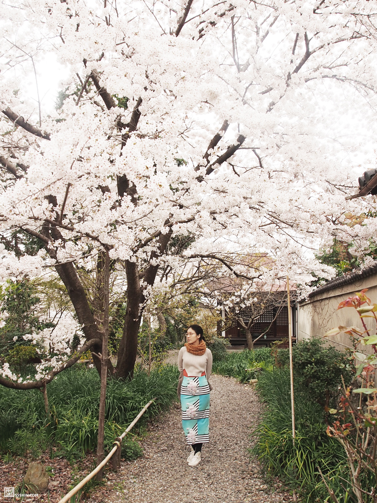 house-of-cherry-blossom_4